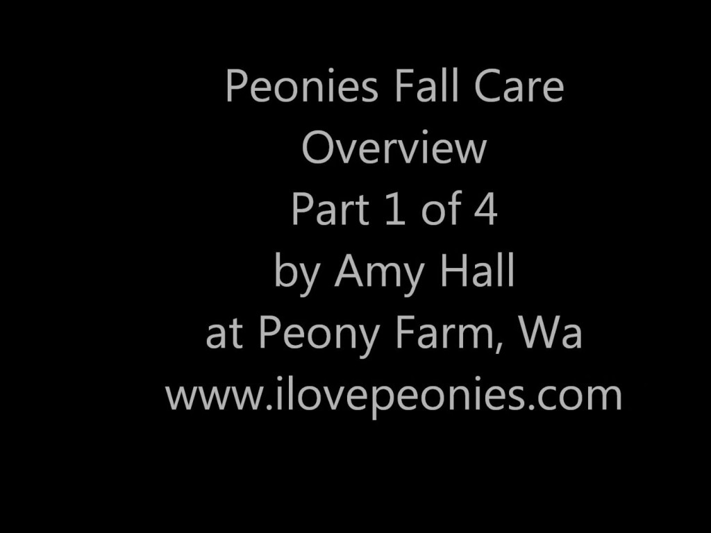 Peonies Fall Care overview