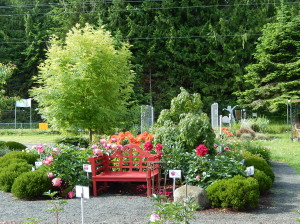 Viewing bench surrounded by Peonies